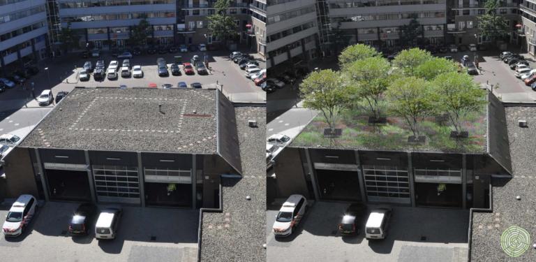 boomveren als dakkroon op dak