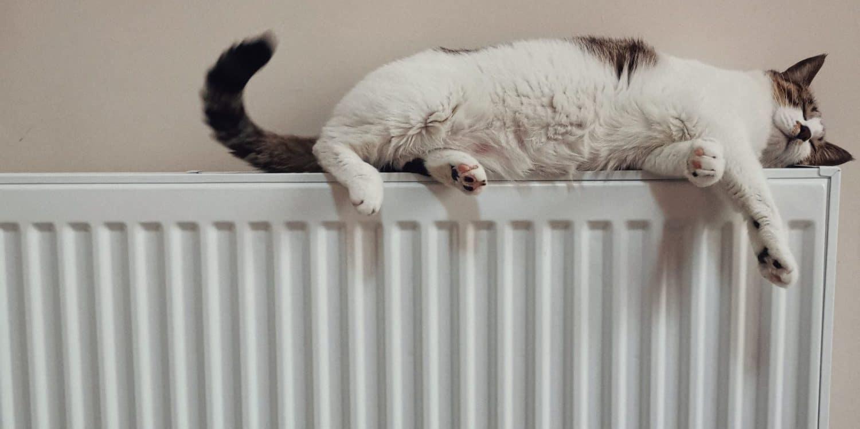 white and black cat on white radiator heater