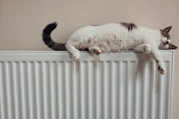 white and black cat on white radiator heater